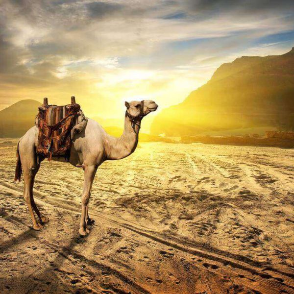 evening-desert-safari-enjoy-the-best-in-your-life